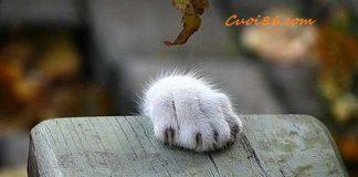 Tiếc con mèo hay món bánh