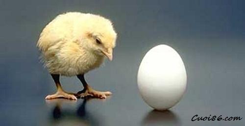Trứng và gà