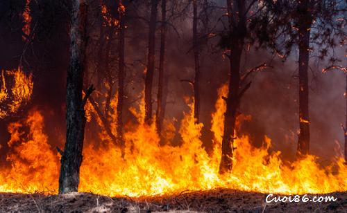 Cảnh cháy rừng
